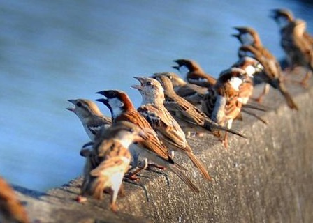 Children And Students Rally In Coimbatore To Save Sparrows