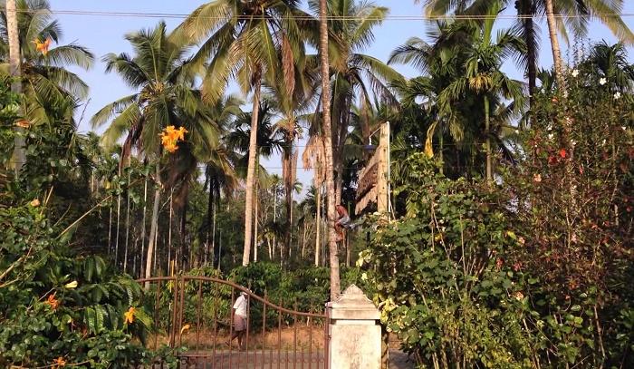 Kerala Village Meenangadi s
